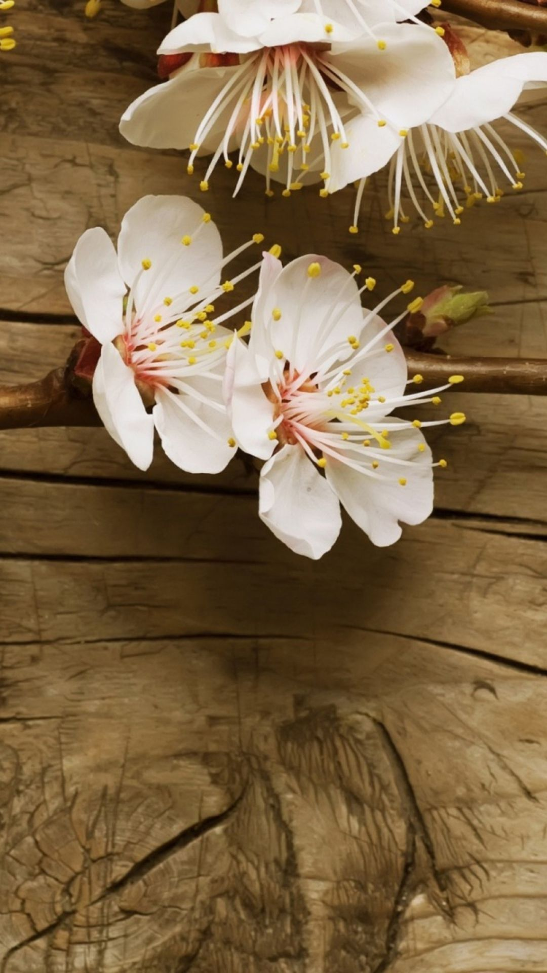 Flowers On Wooden Background Wallpaper