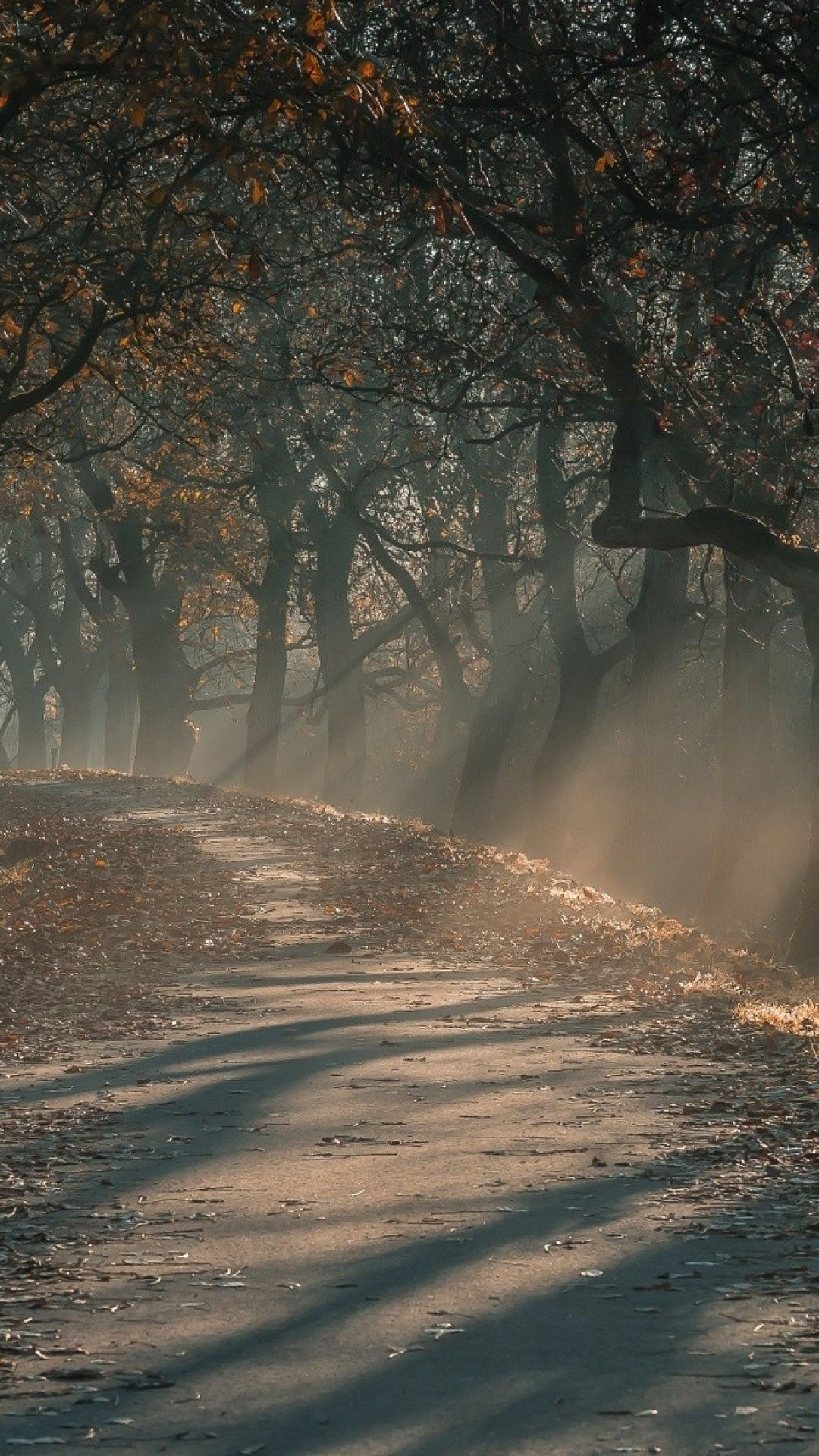 Forest And Road And Fog