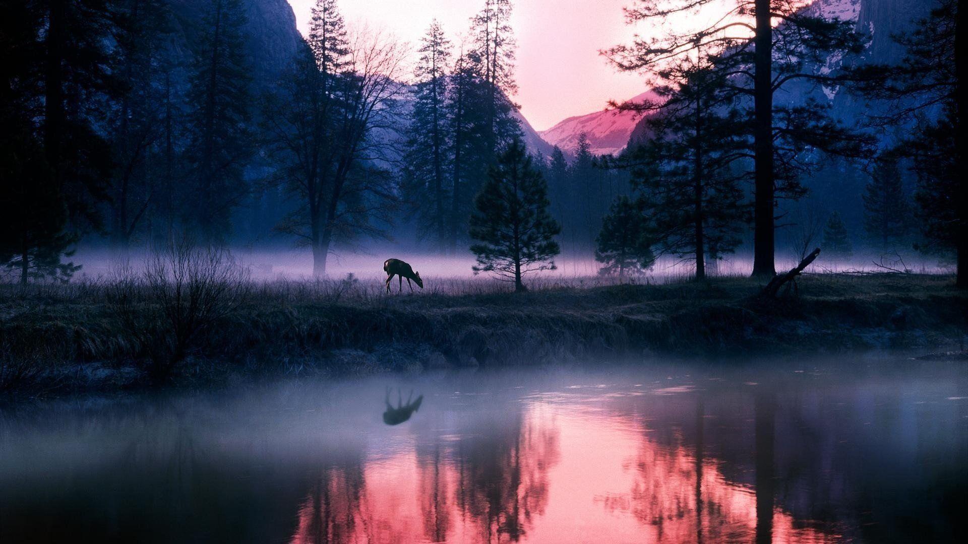 Forest Lake Fog
