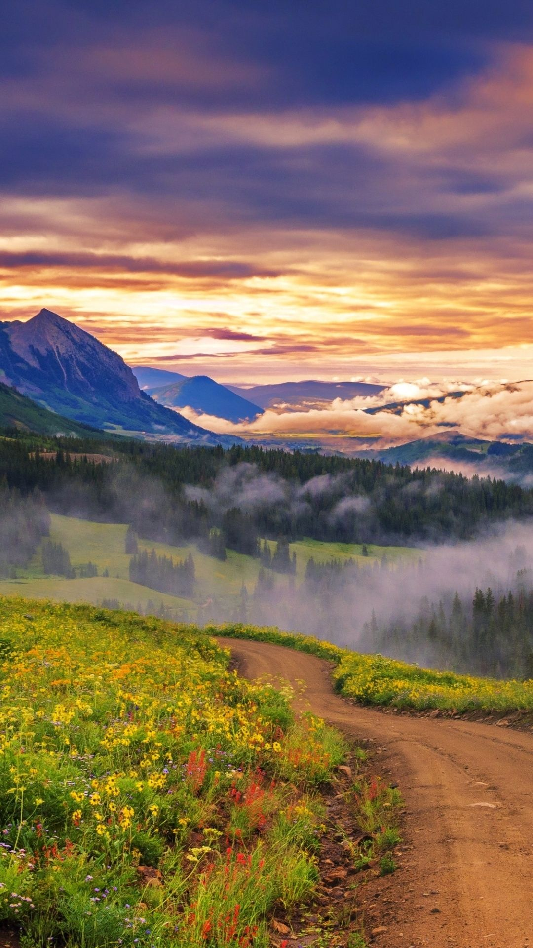 Forest Mountains Dawn
