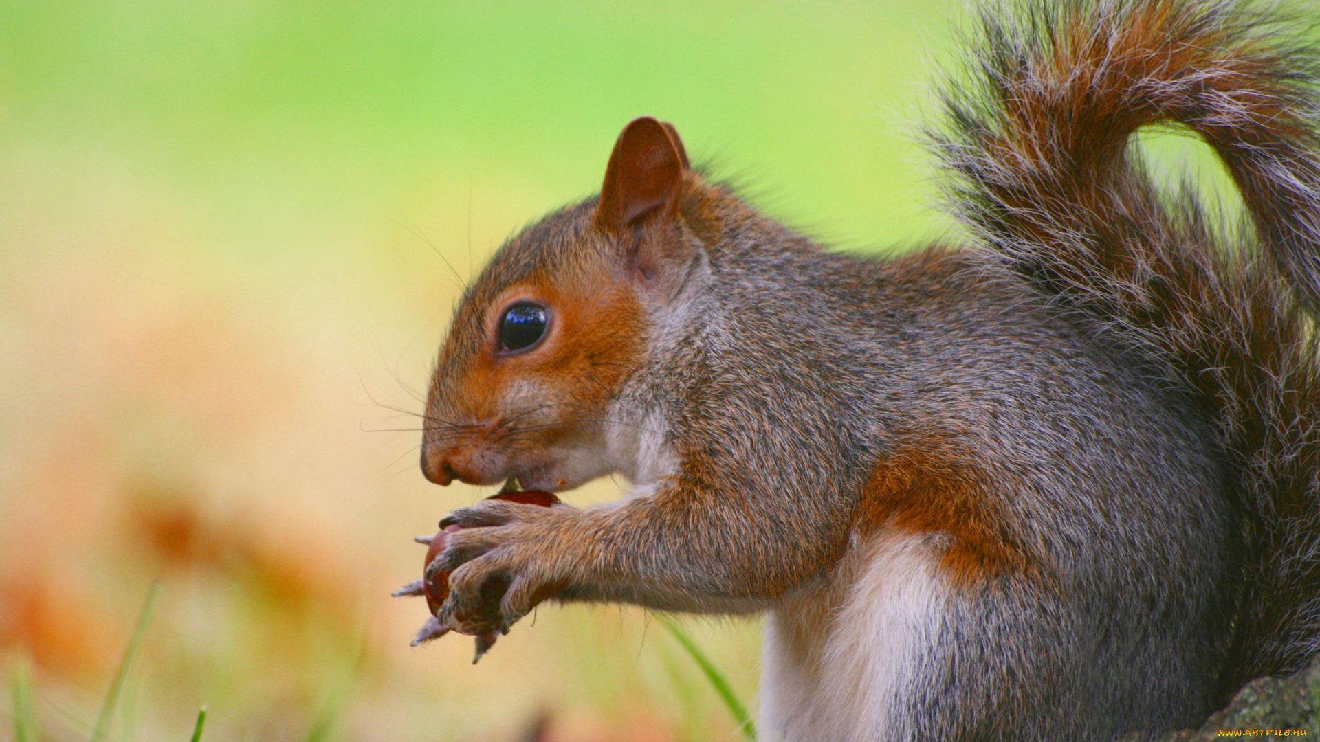Forest Squirrel Photo