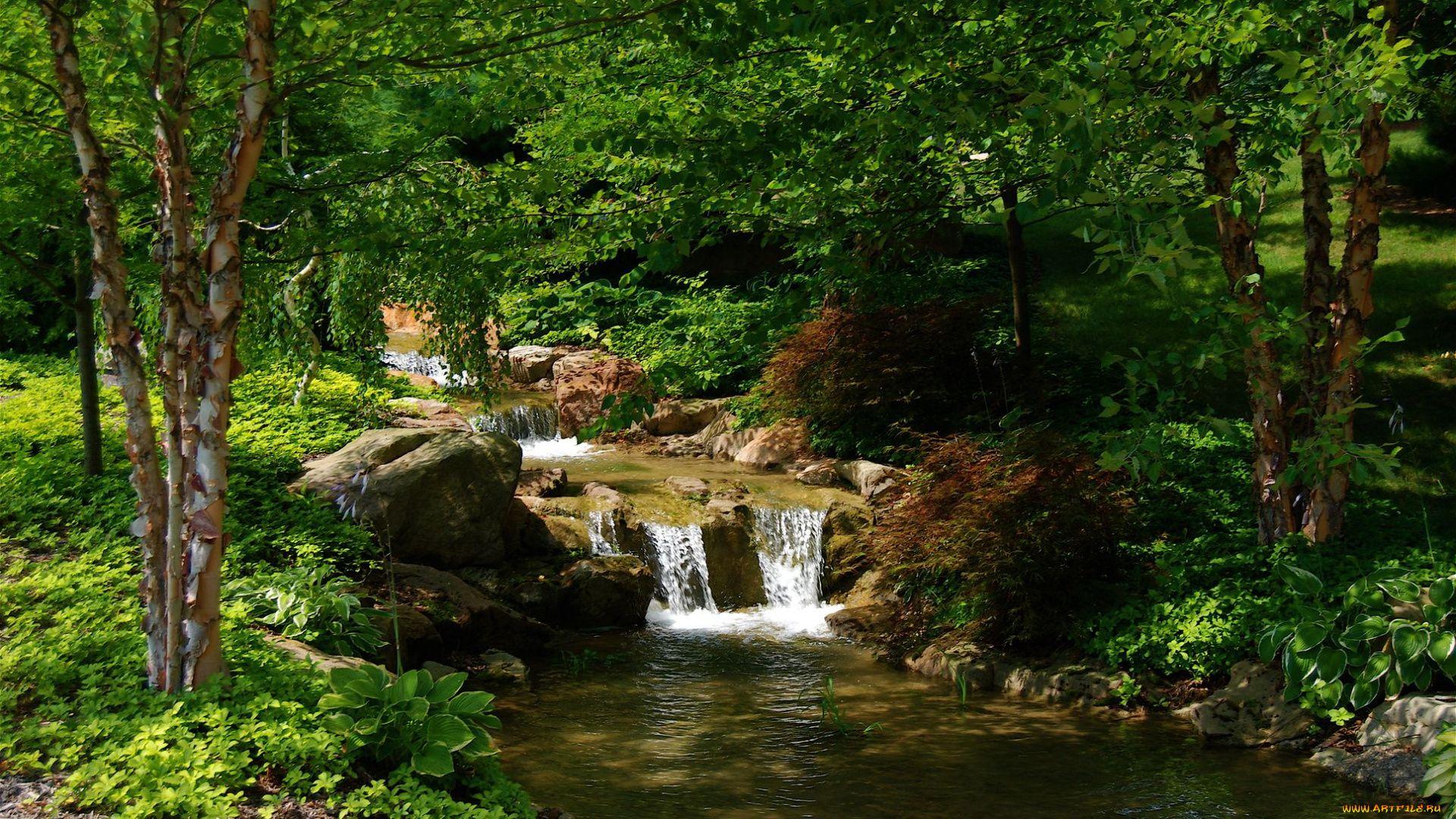 Forest Stream Photos