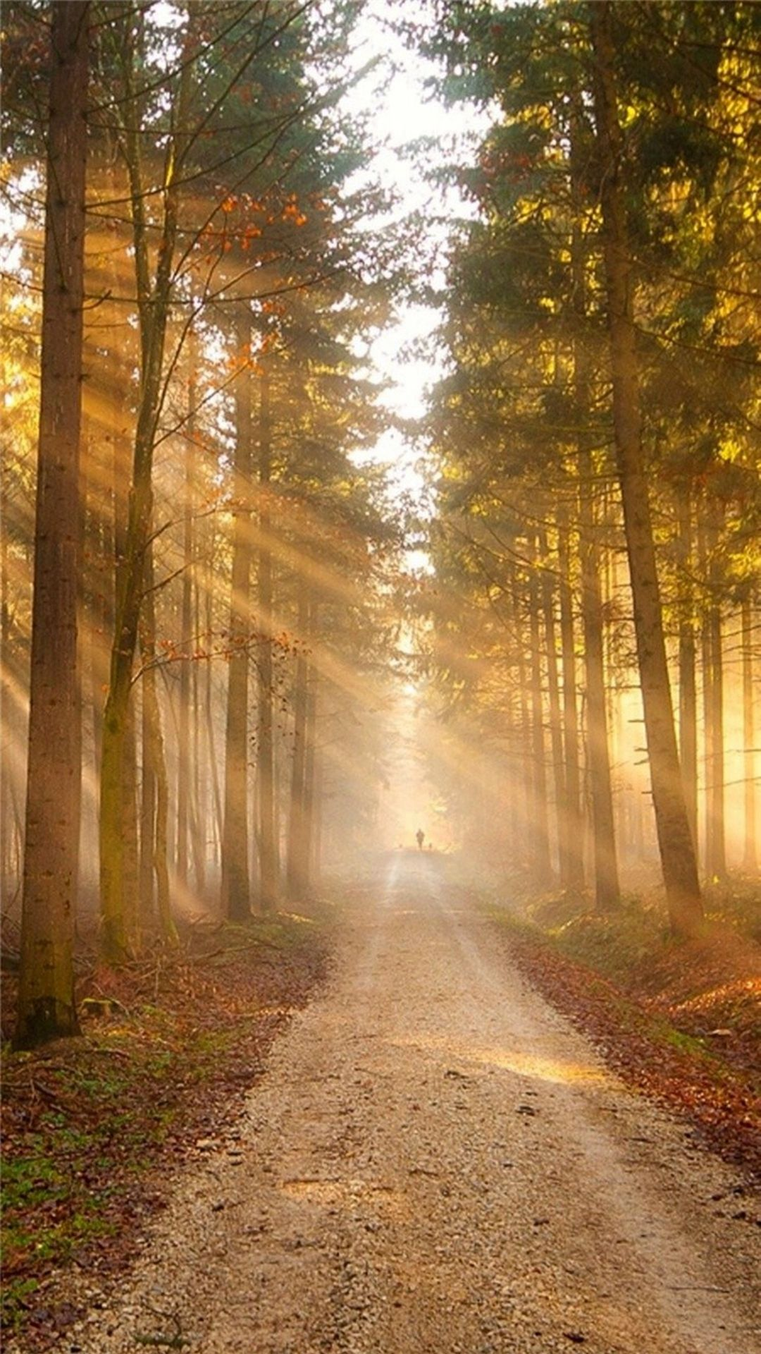 Forest Sunlight Path Photo