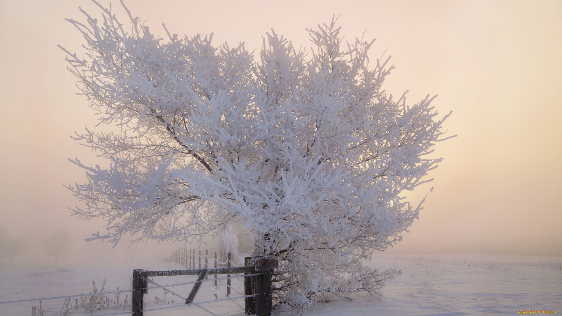 Frosty Winter Morning Photo