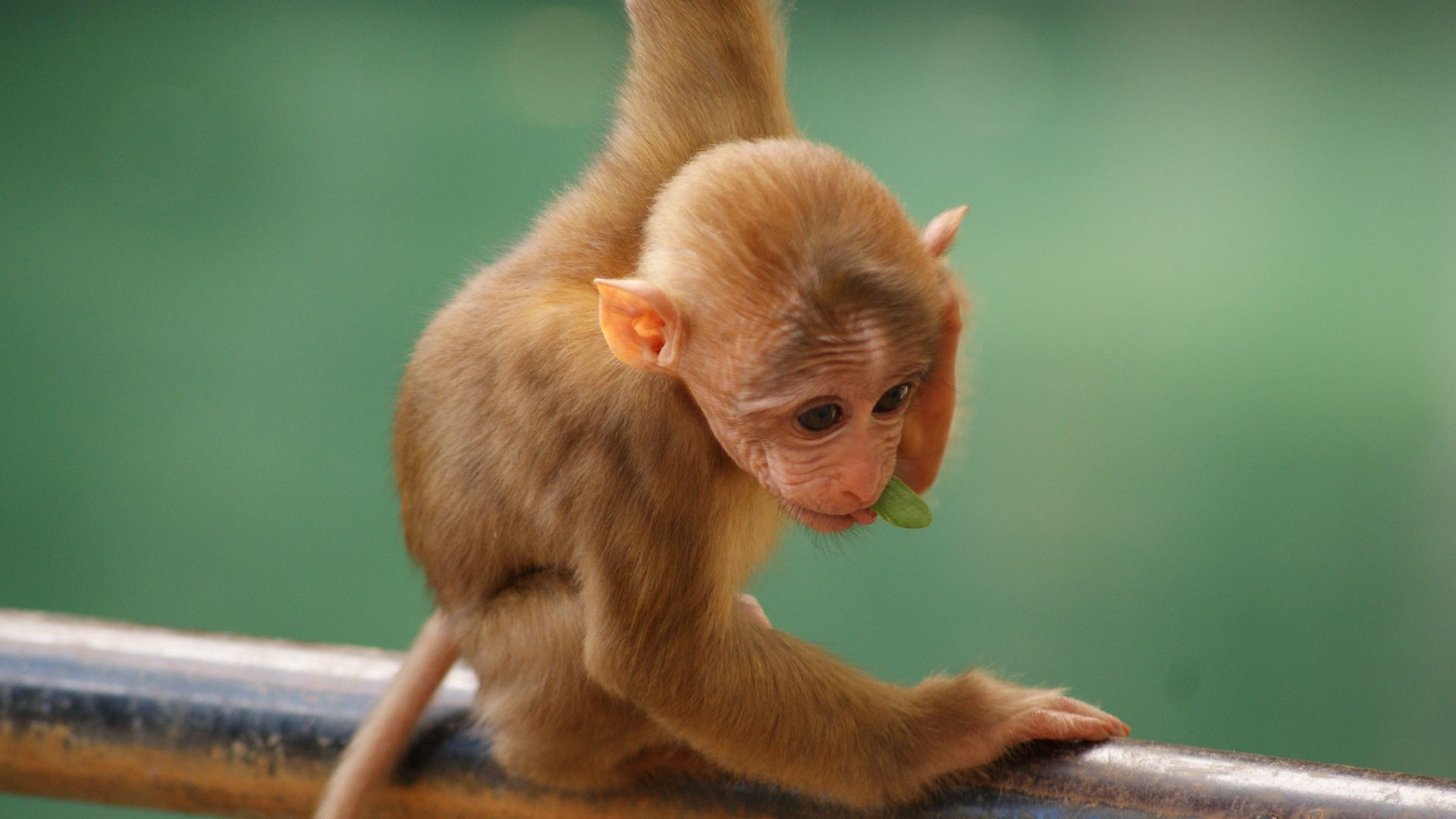 Funny Monkeys Pictures