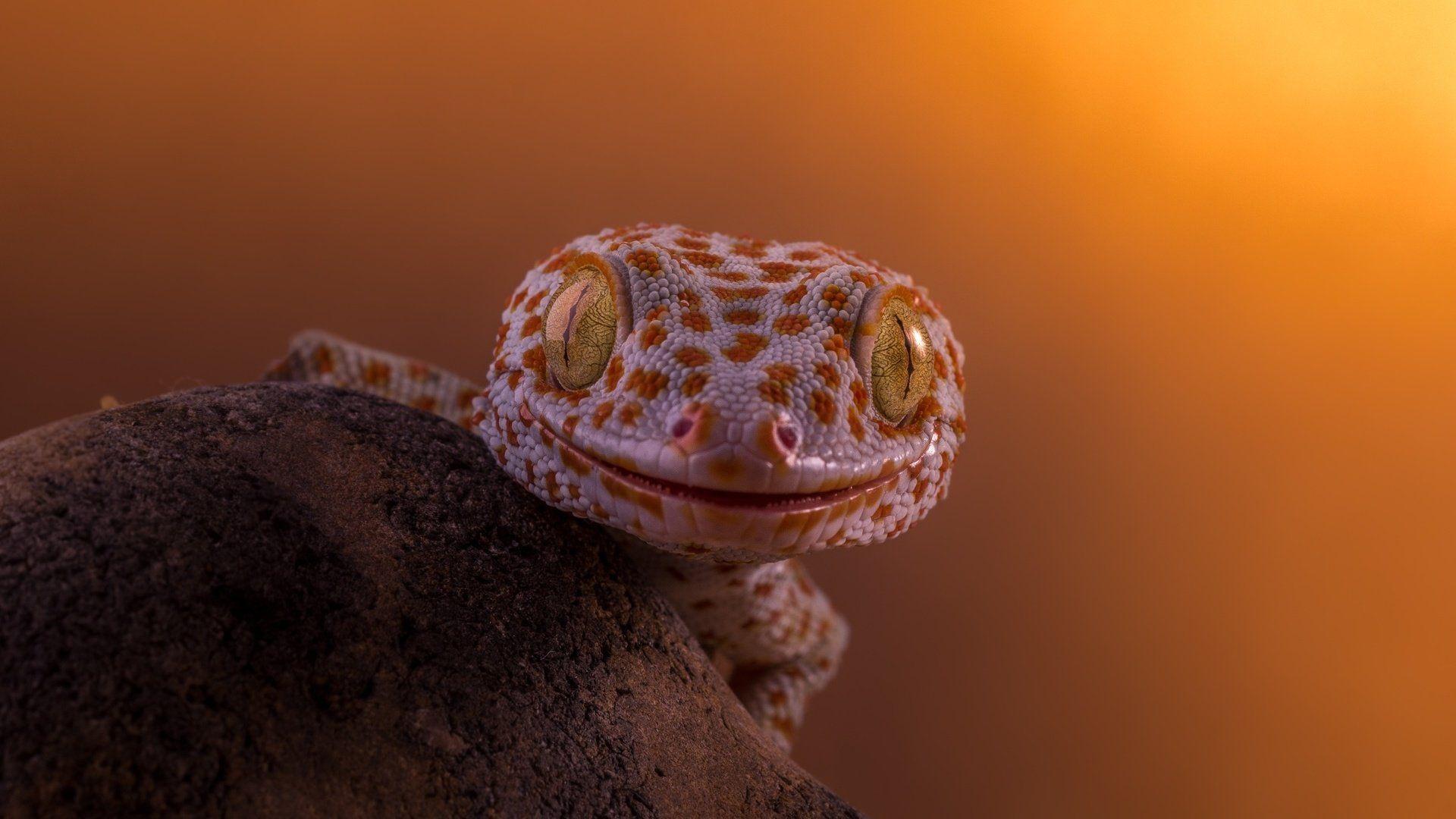 Geckos Desk
