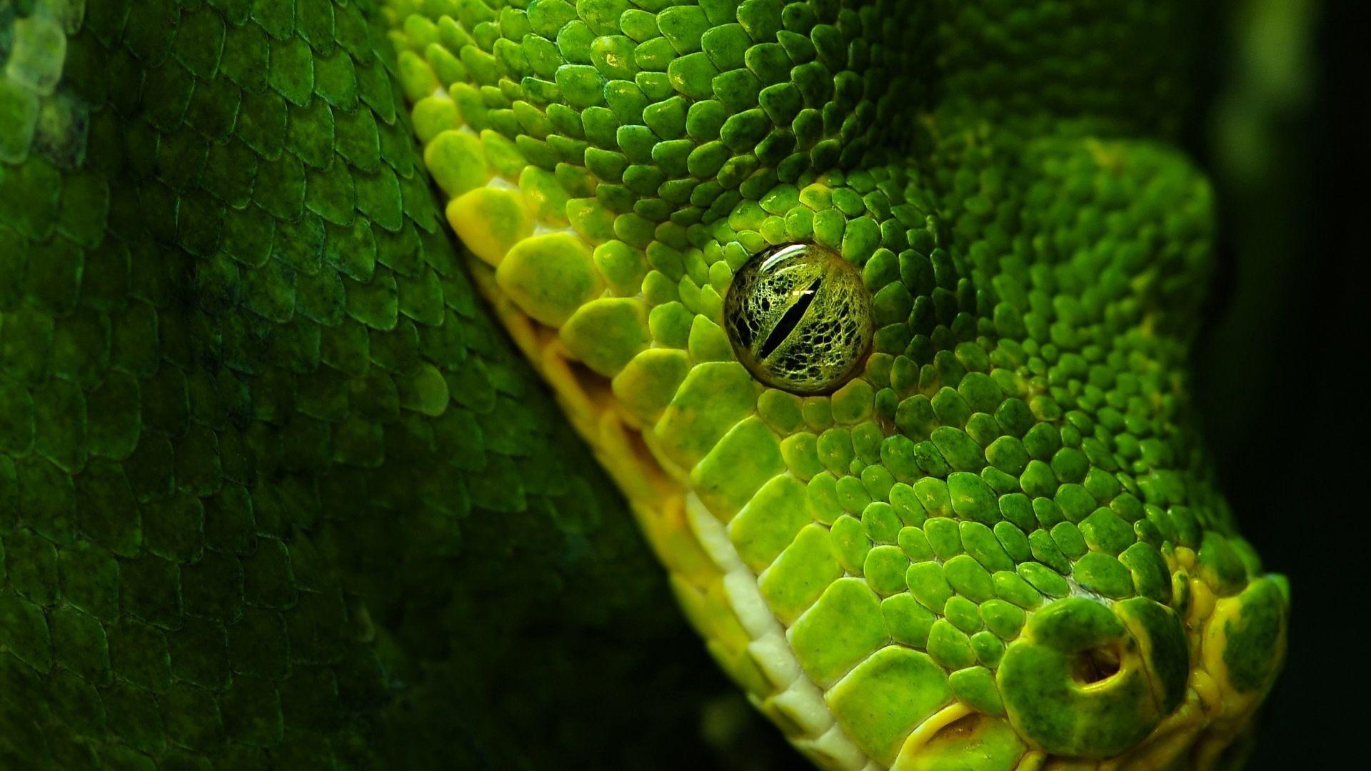Green Snake Eyes