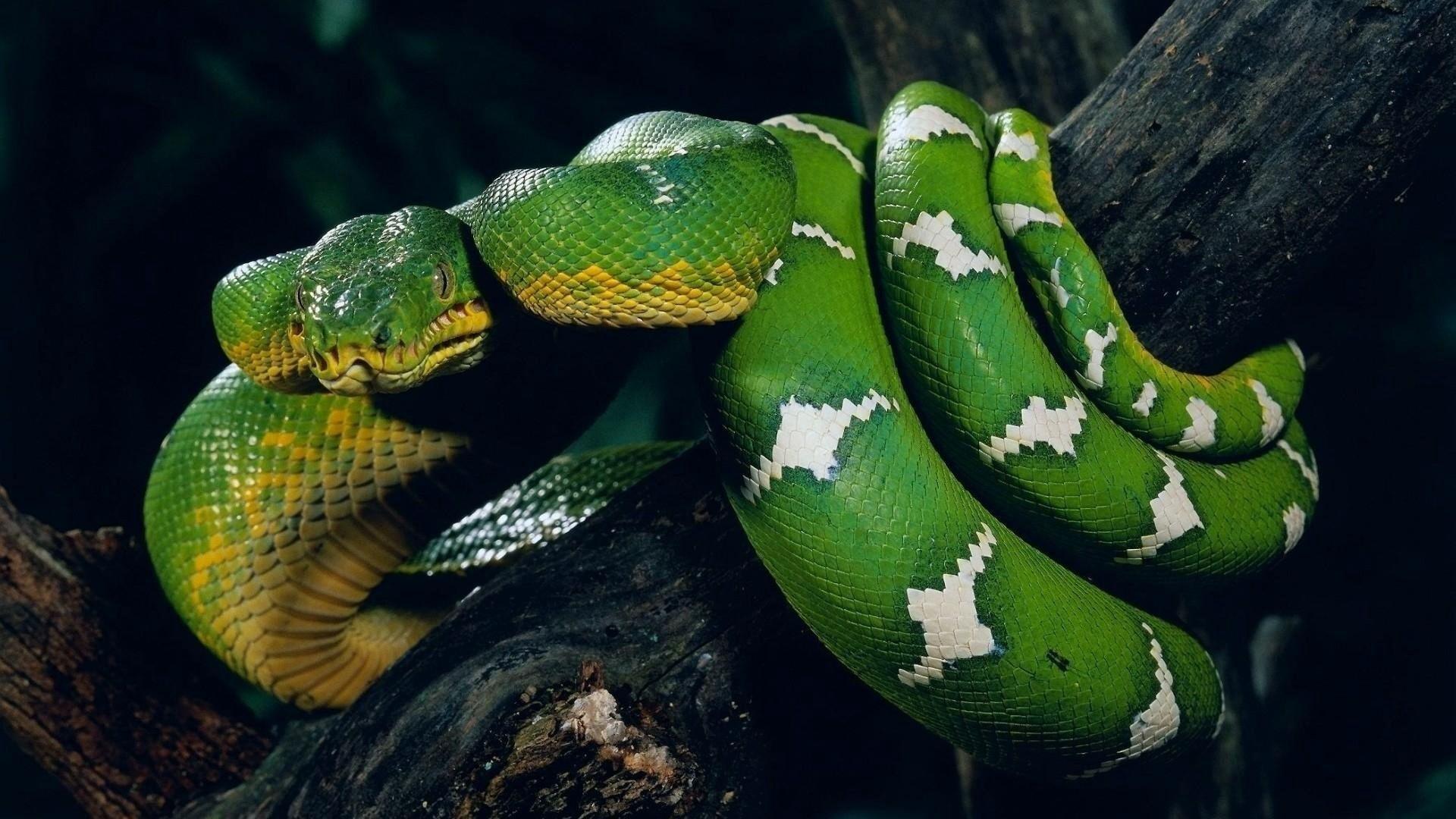 Green Snake Photo