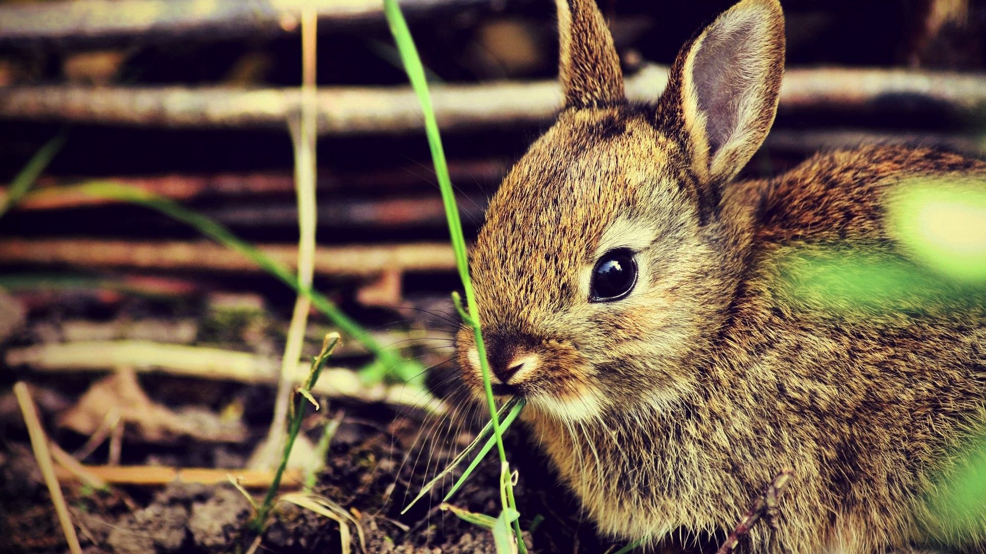 Hare Beautiful Photo