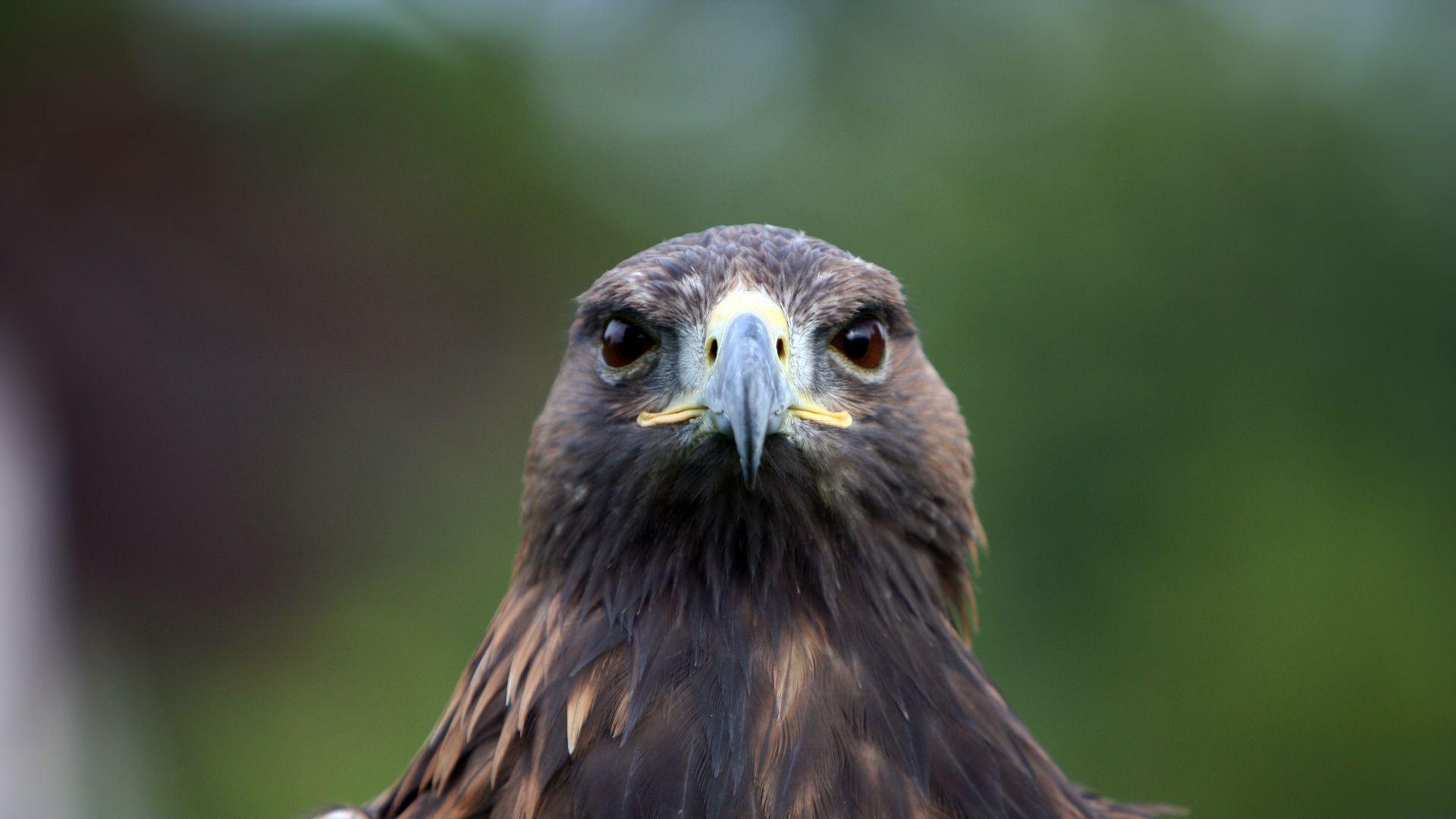Hawk Full Face