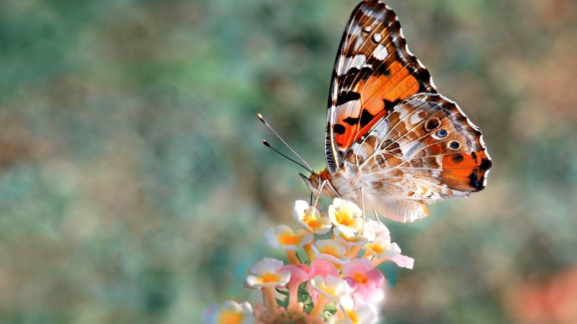 Hd Photos Of Butterflies