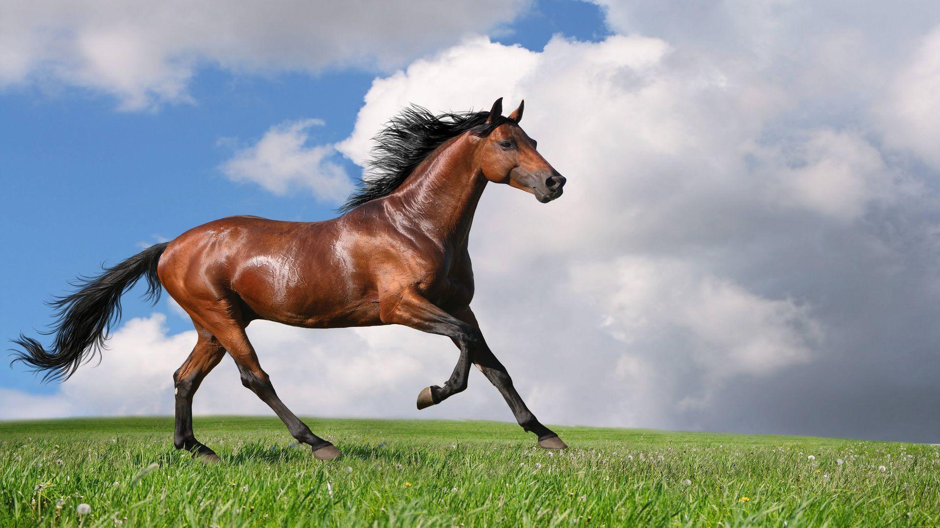 He Has Bay Horses