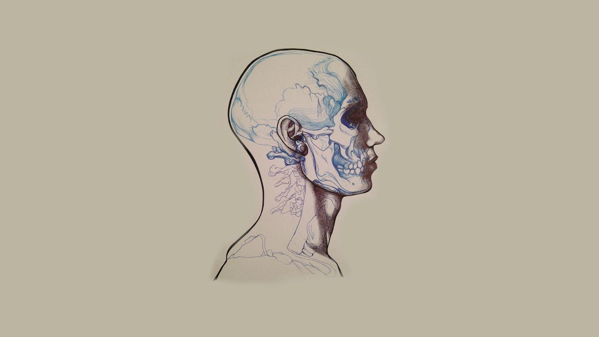 Head Anatomy Iphone Wallpaper