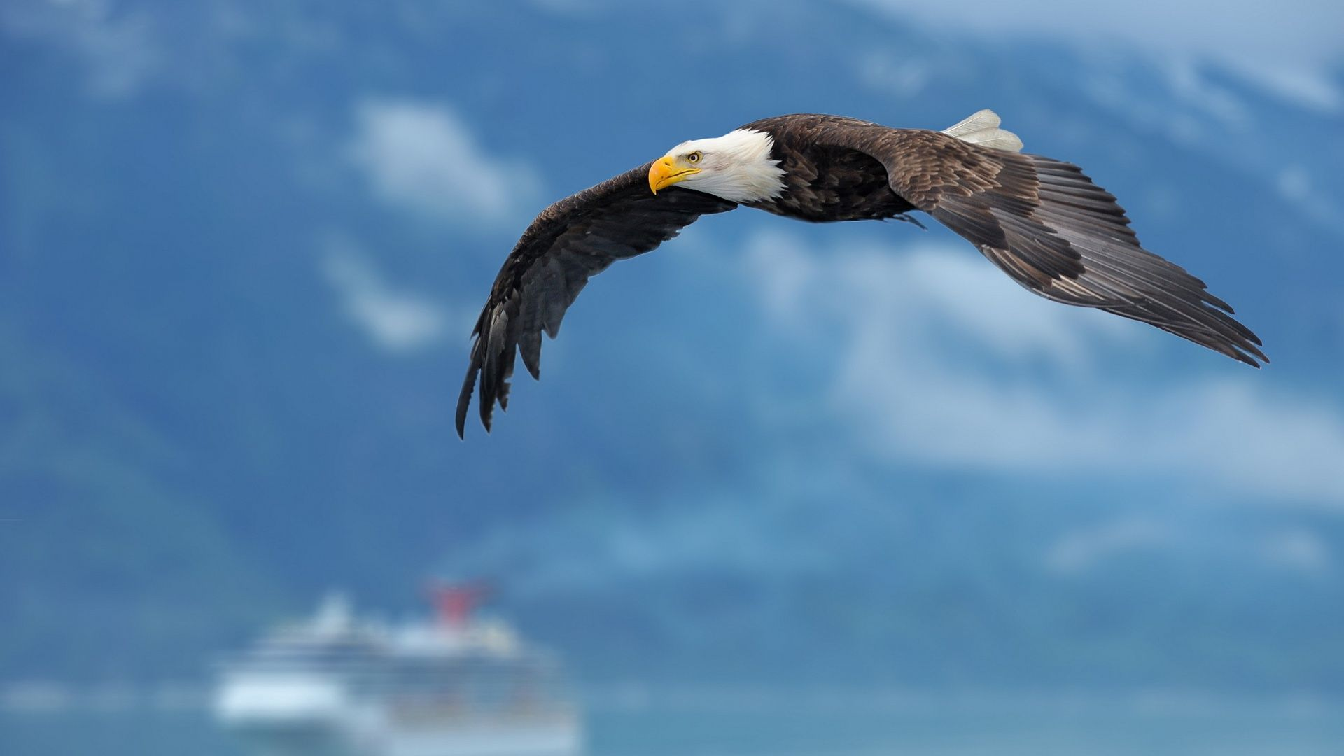 High Resolution Photo Of An Eagle In Flight