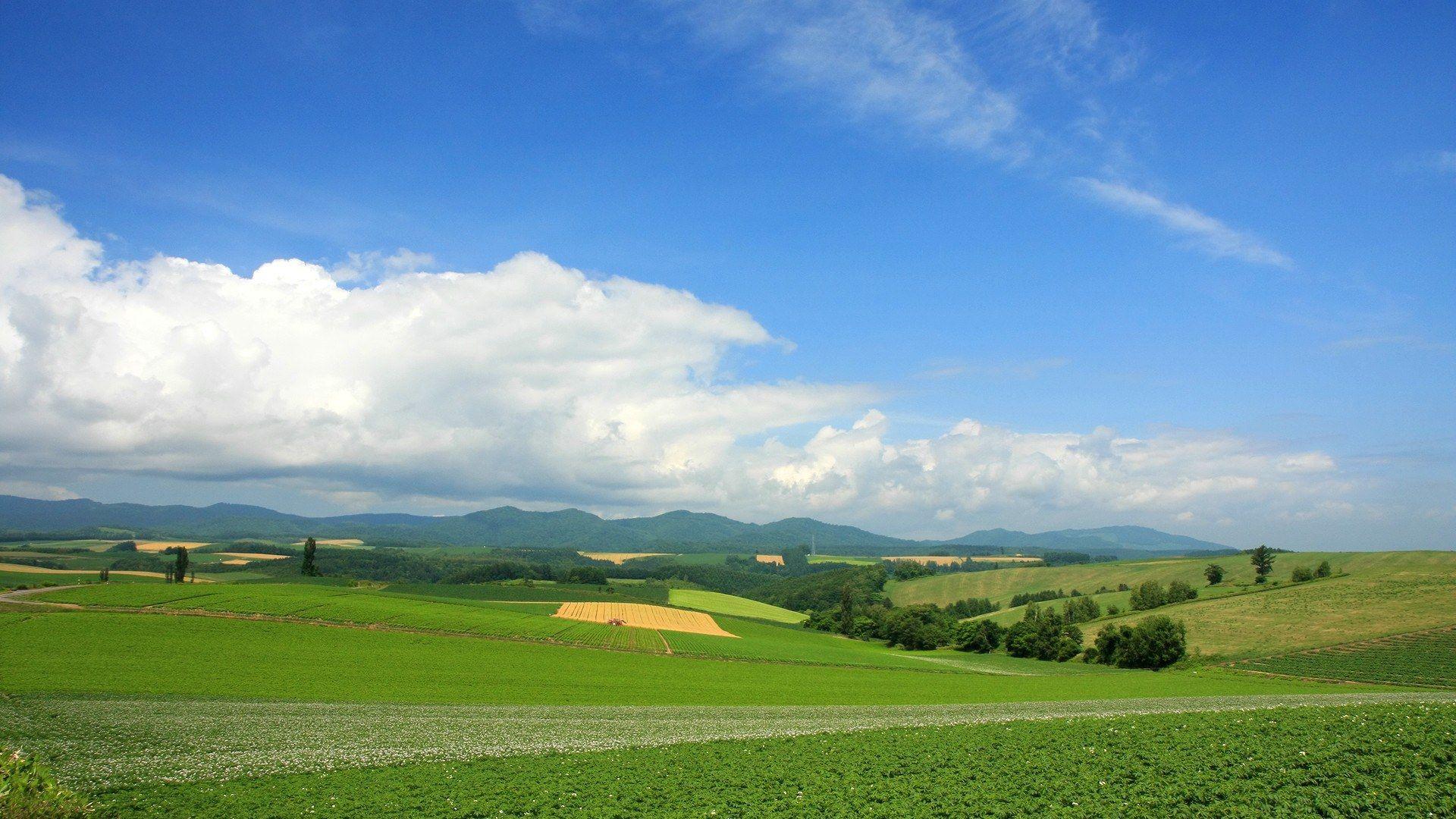 Horizon Field