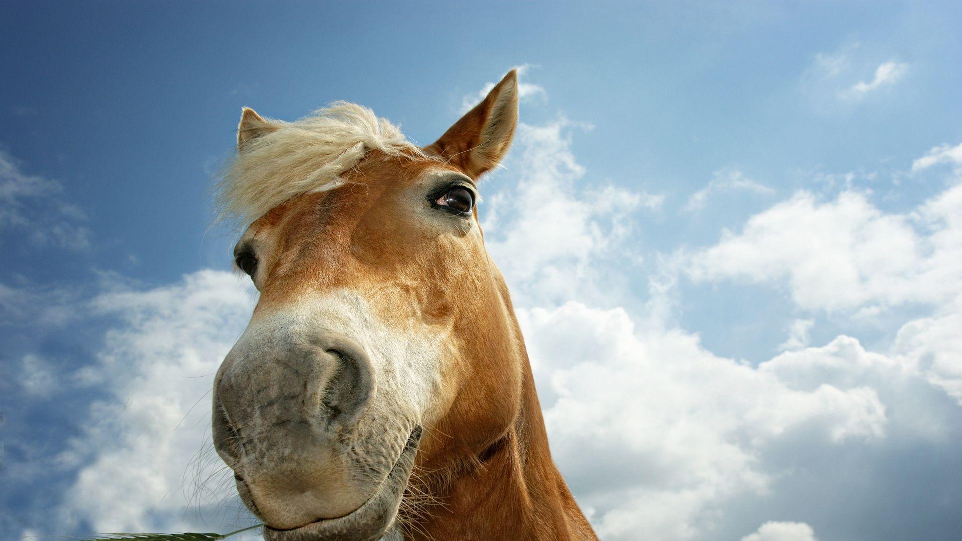 Horse Face Photo