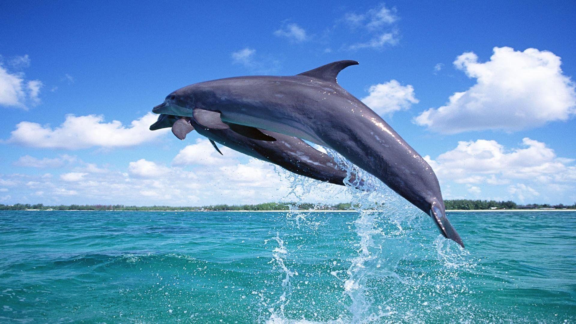 Images For Desktop Dolphins