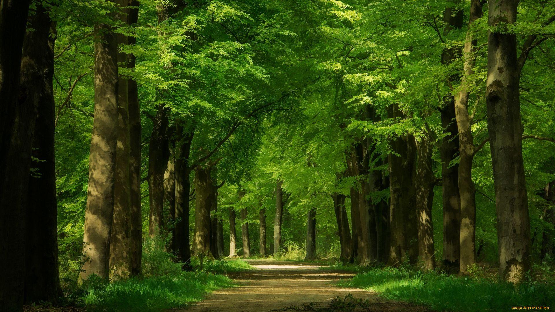 Images For Desktop Forest