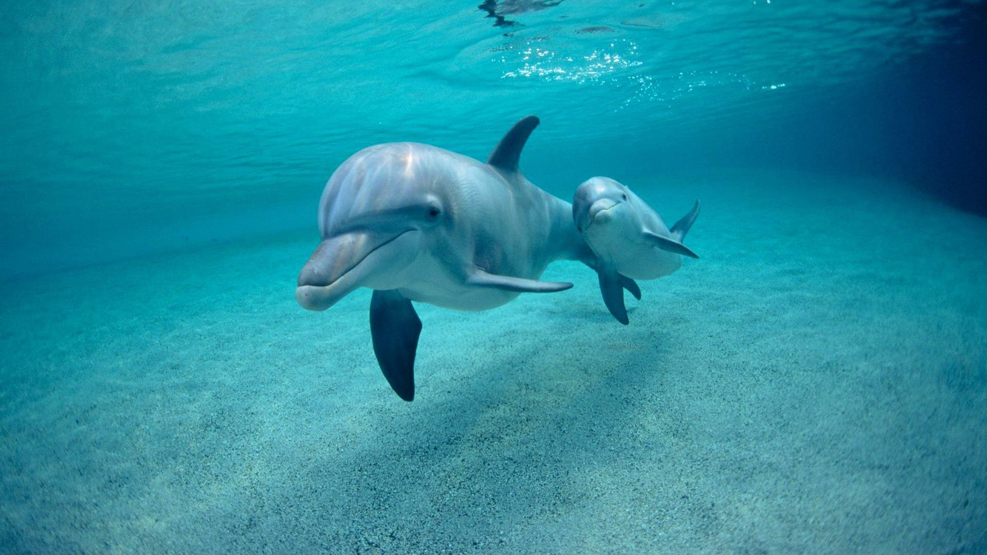 Images Of Animals Dolphin