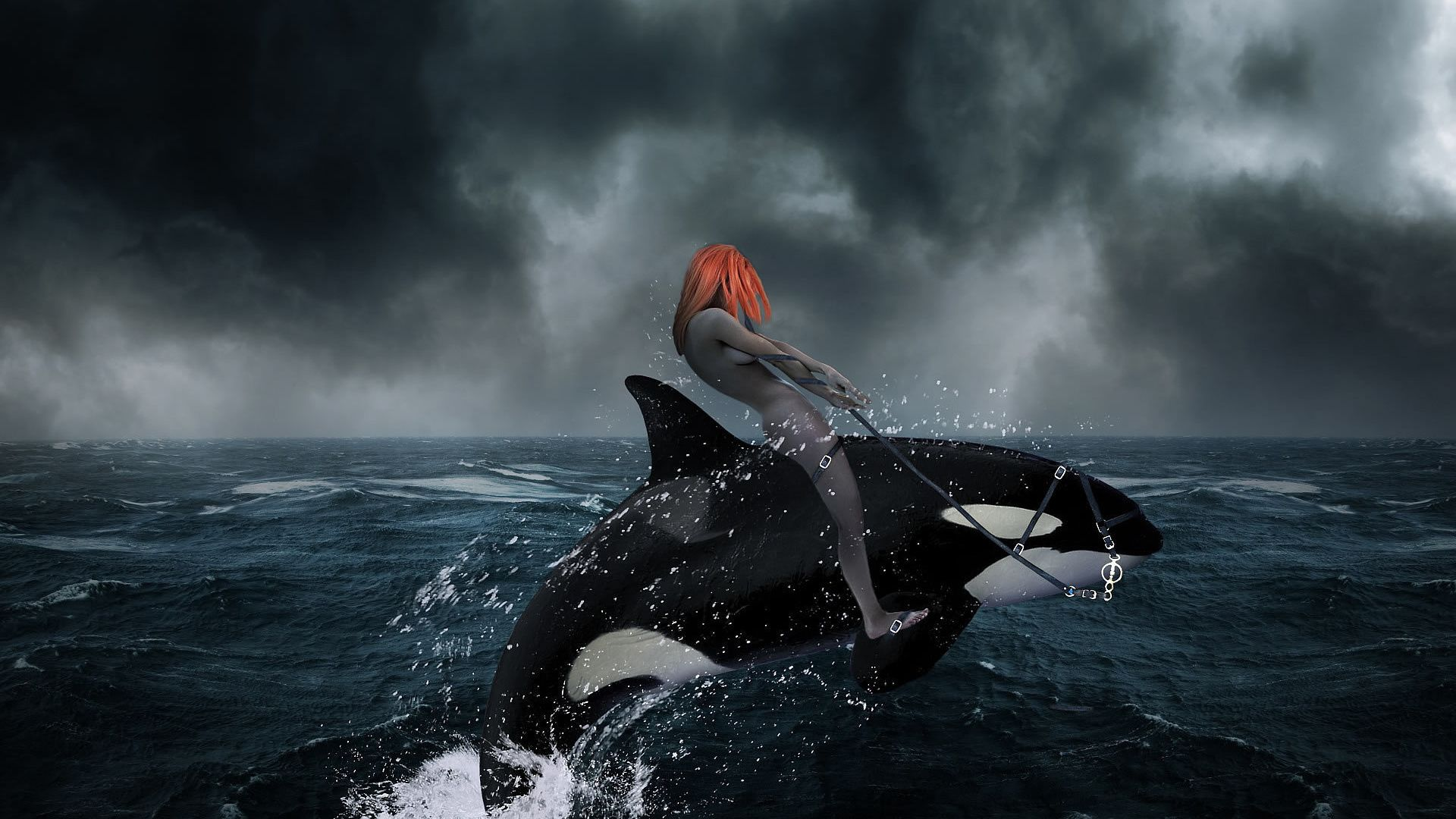 Killer Whale In The Storm