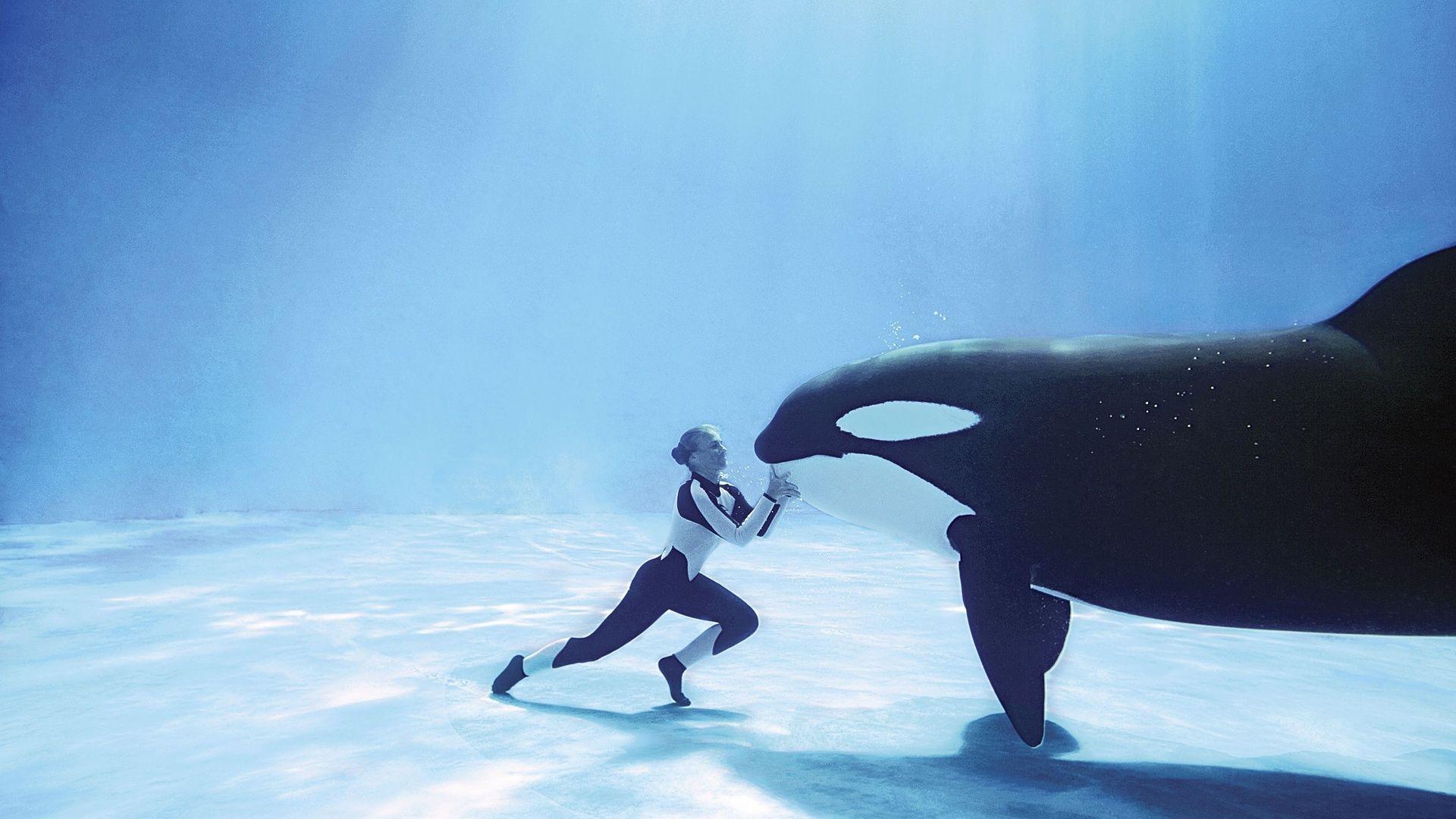 Killer Whale Underwater