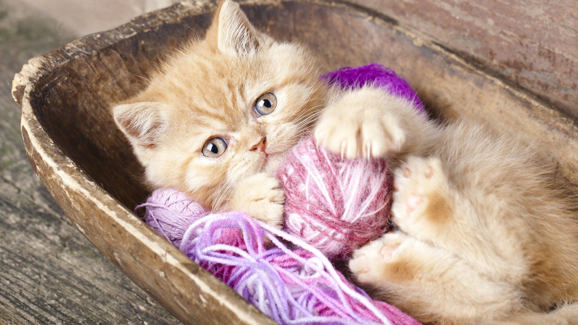 Kitten And A Ball