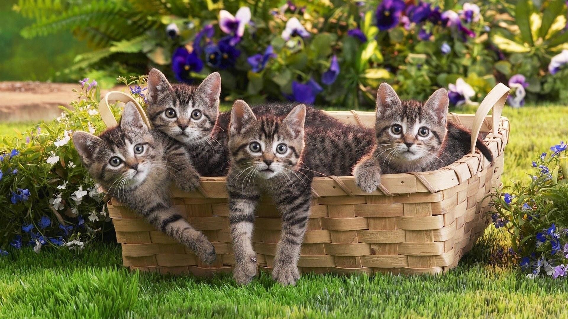 Kittens In A Basket Pictures