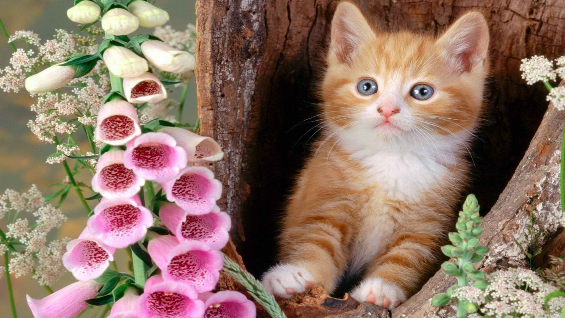 Kittens In Flowers Pictures