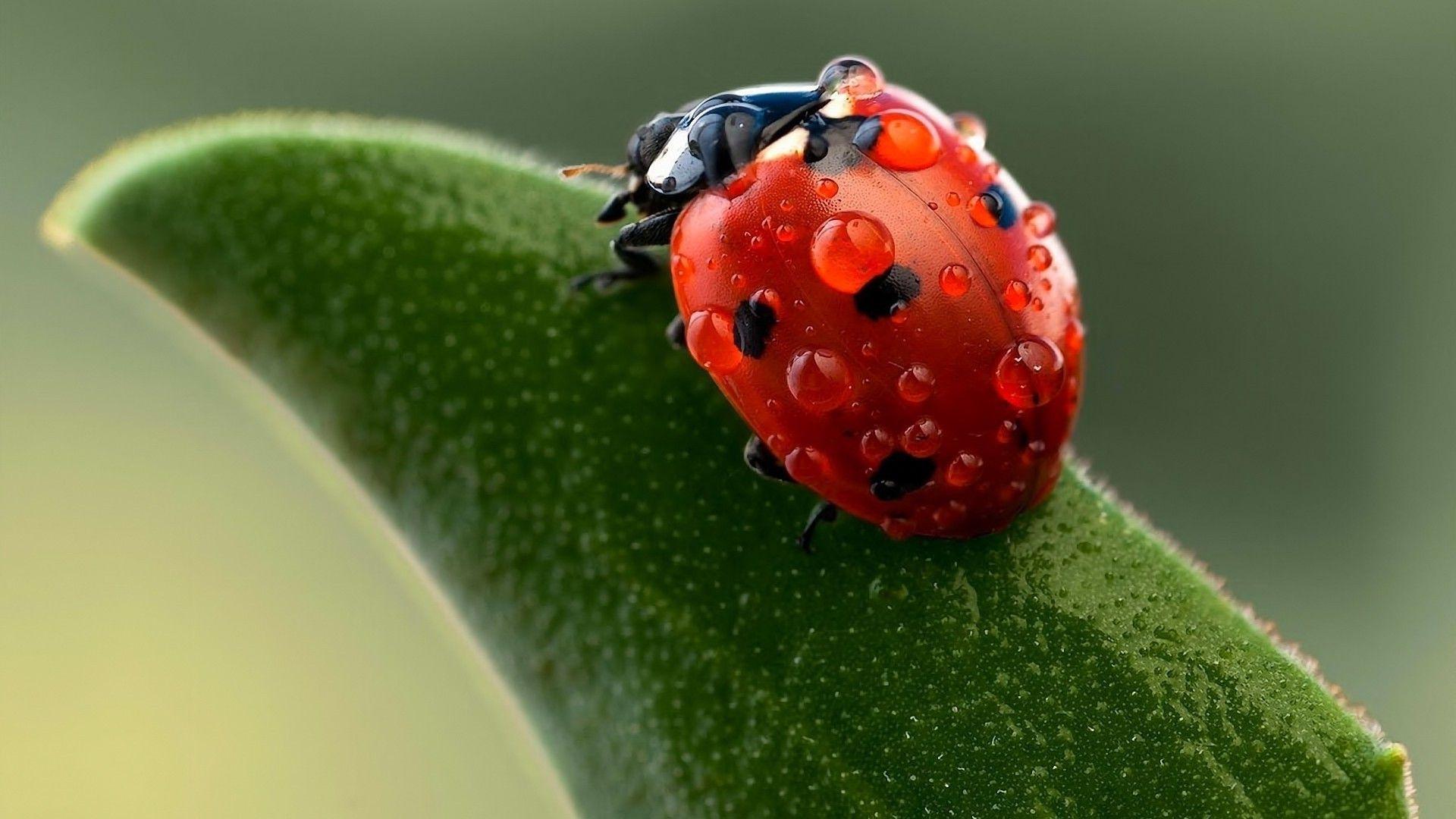 Ladybug On Ava