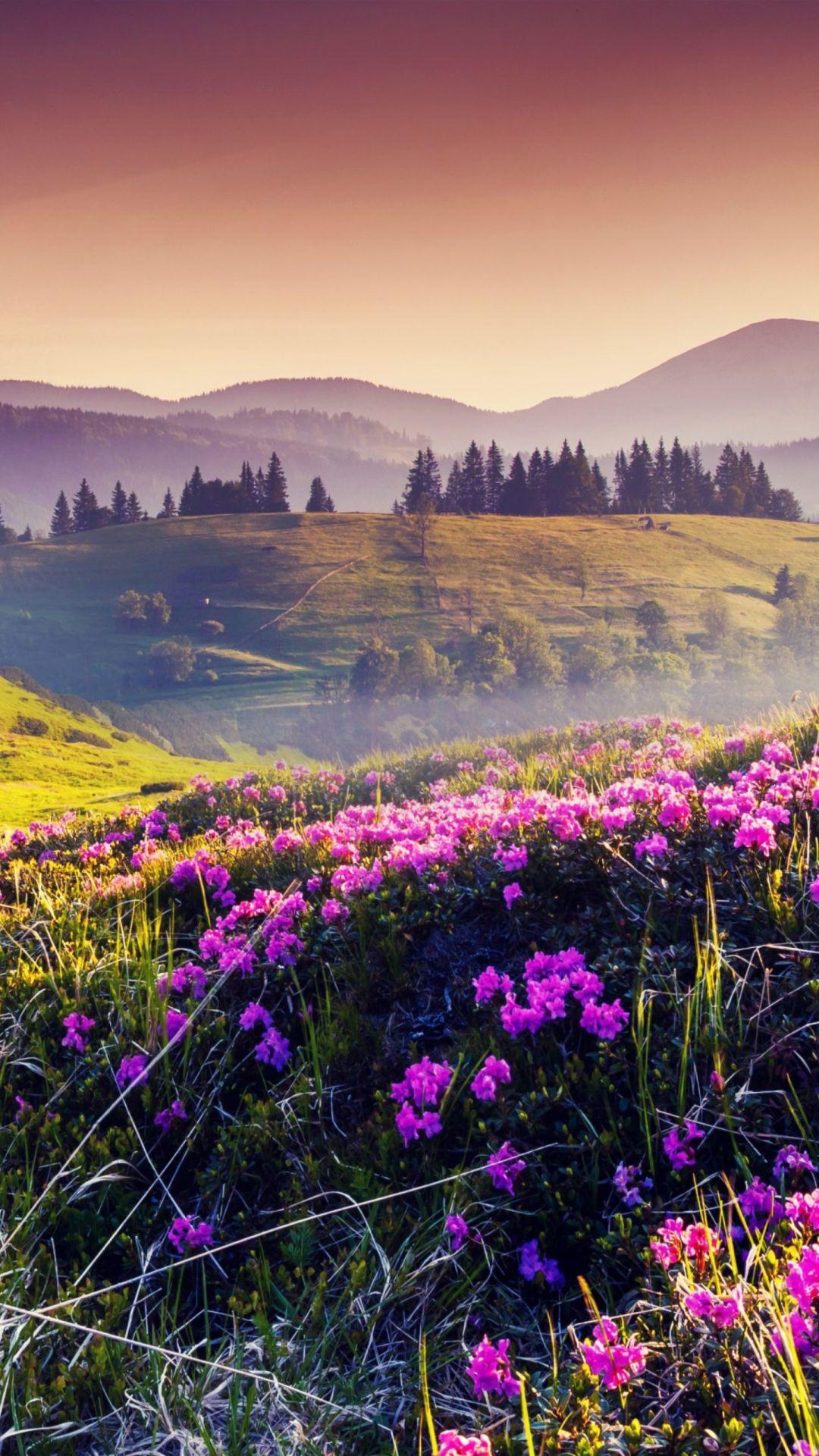 Landscape Flower Photo