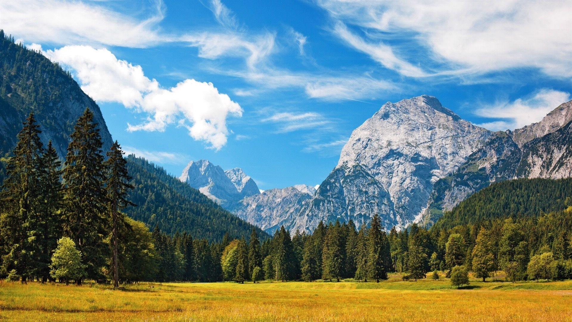 Landscape Mountain Forest