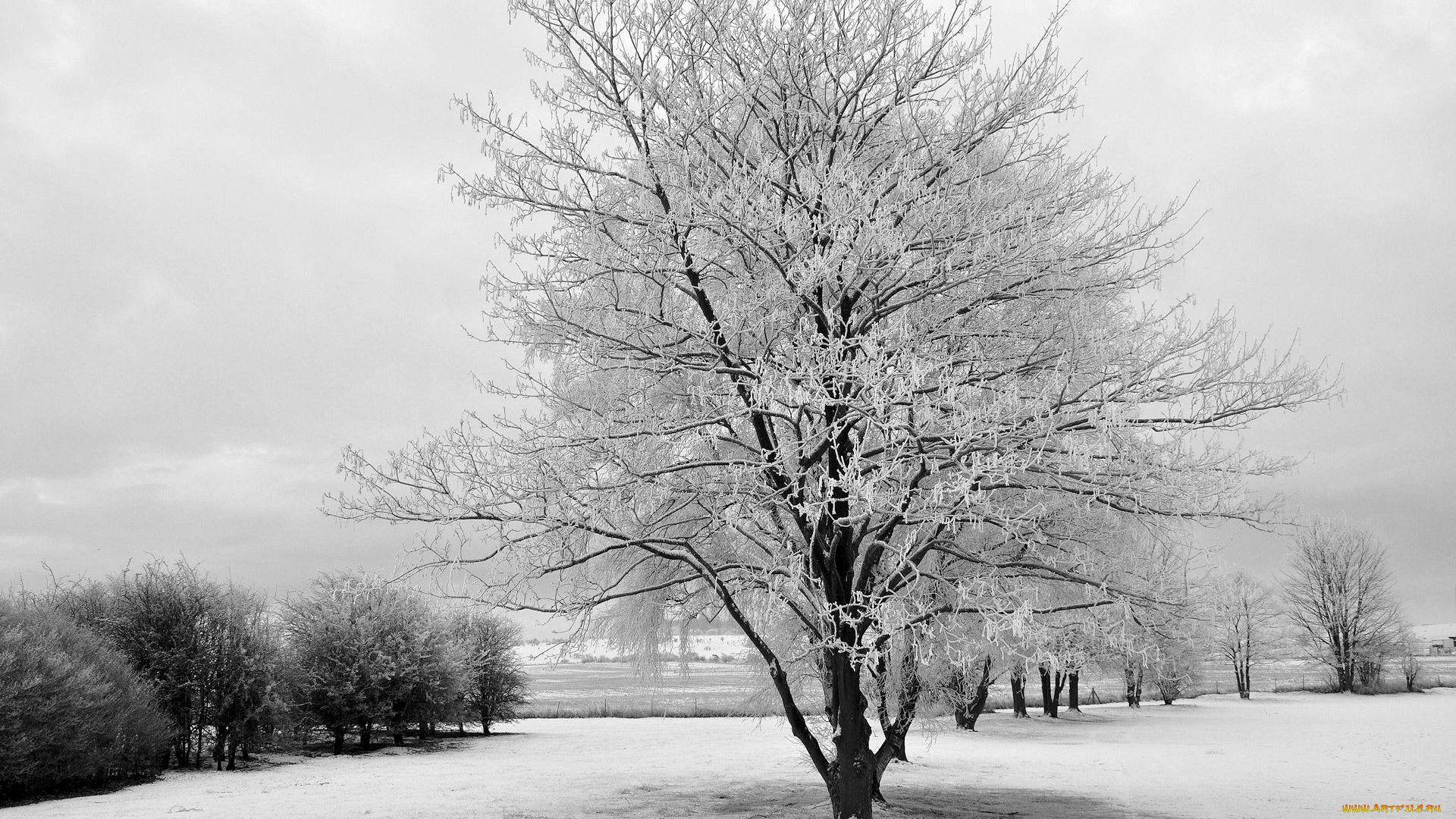 Landscape Tree Bw