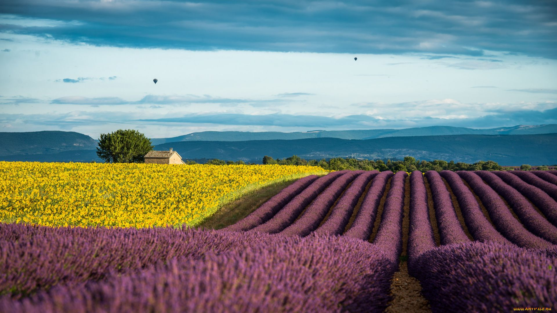 Lavender Fields In Provence France Wallpaper