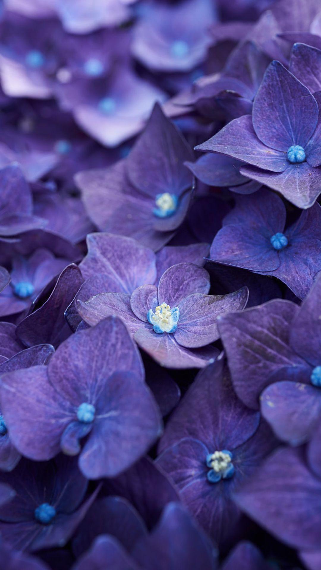 Lilac Blue Flowers