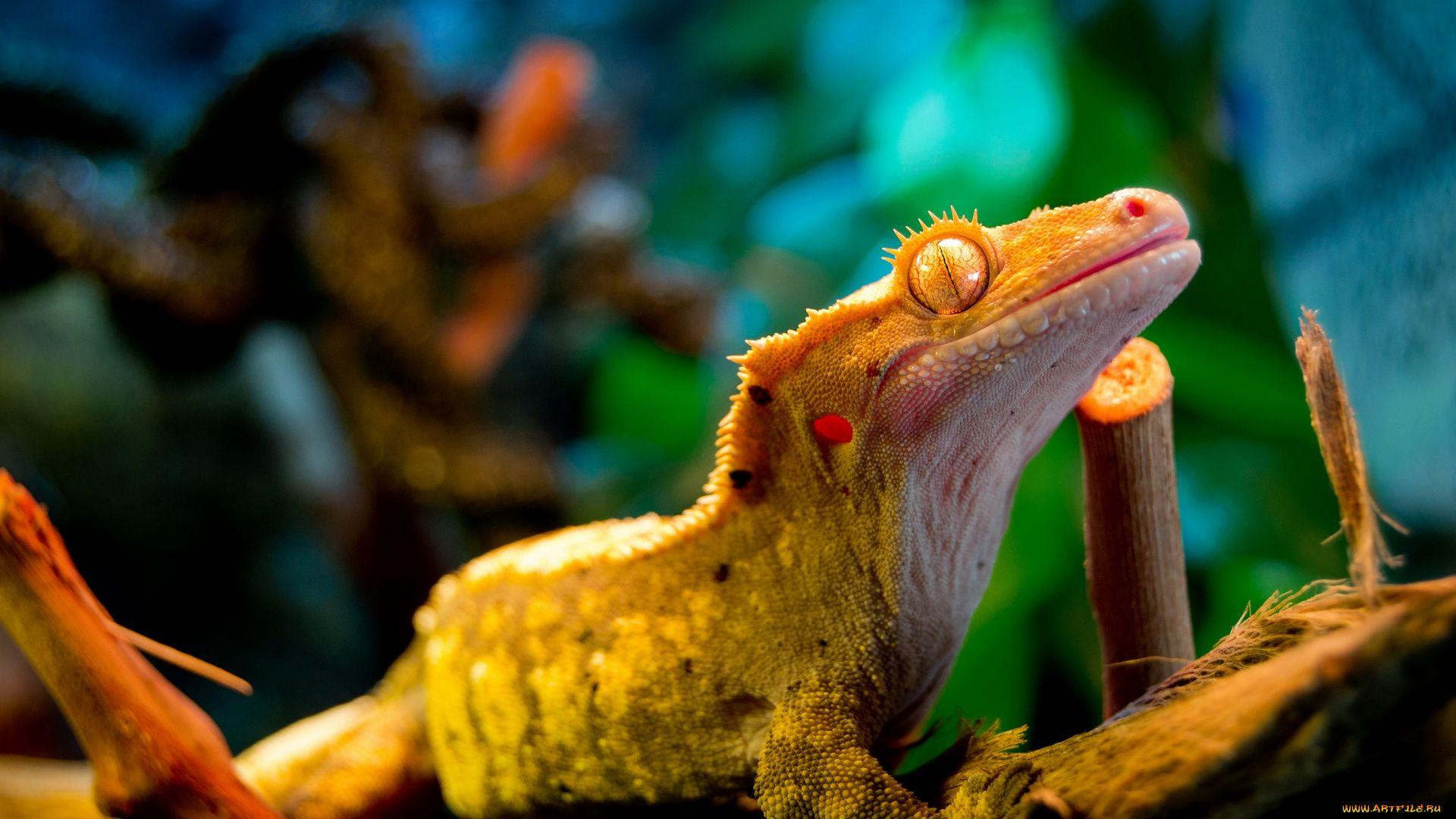 Lizard Banned Photos
