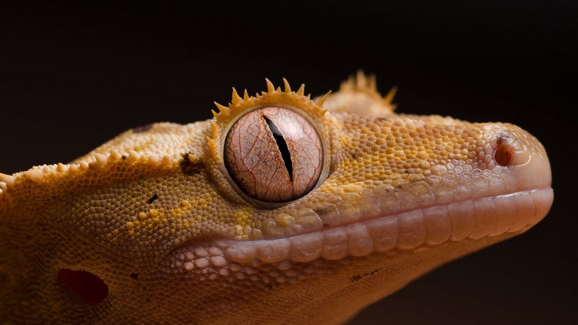 Lizard Eyes Picture