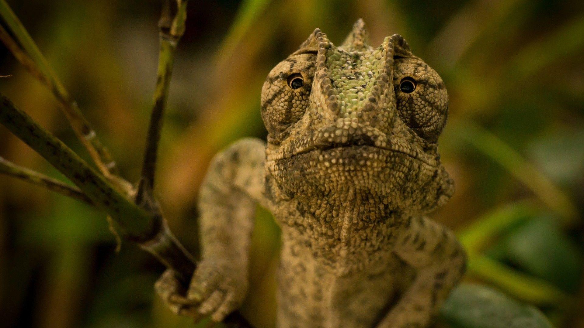 Look Lizards