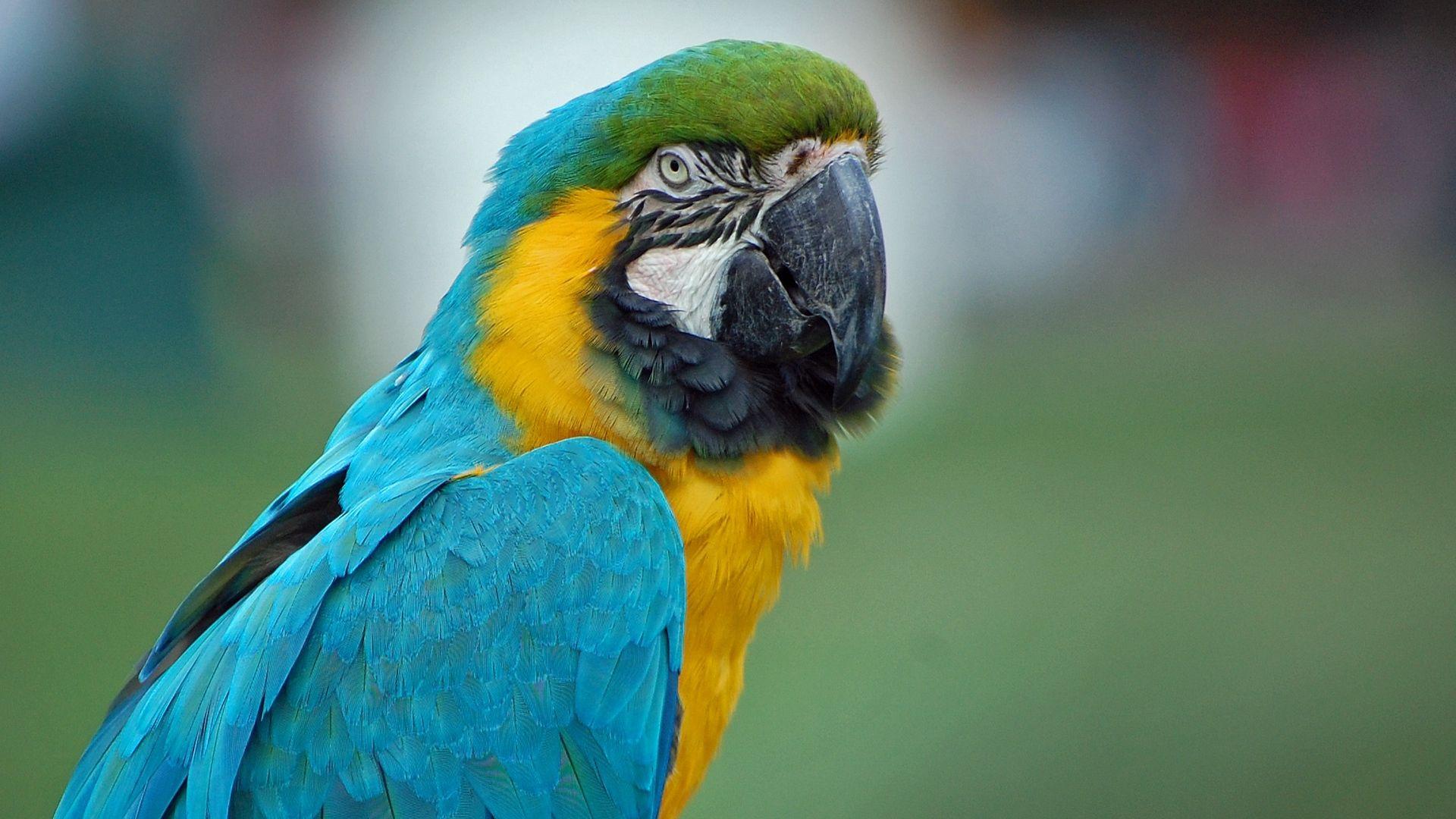 Macaw Parrot Beautiful Photo