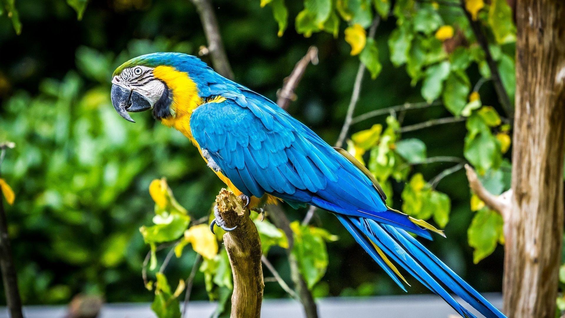 Macaw Parrot Colors
