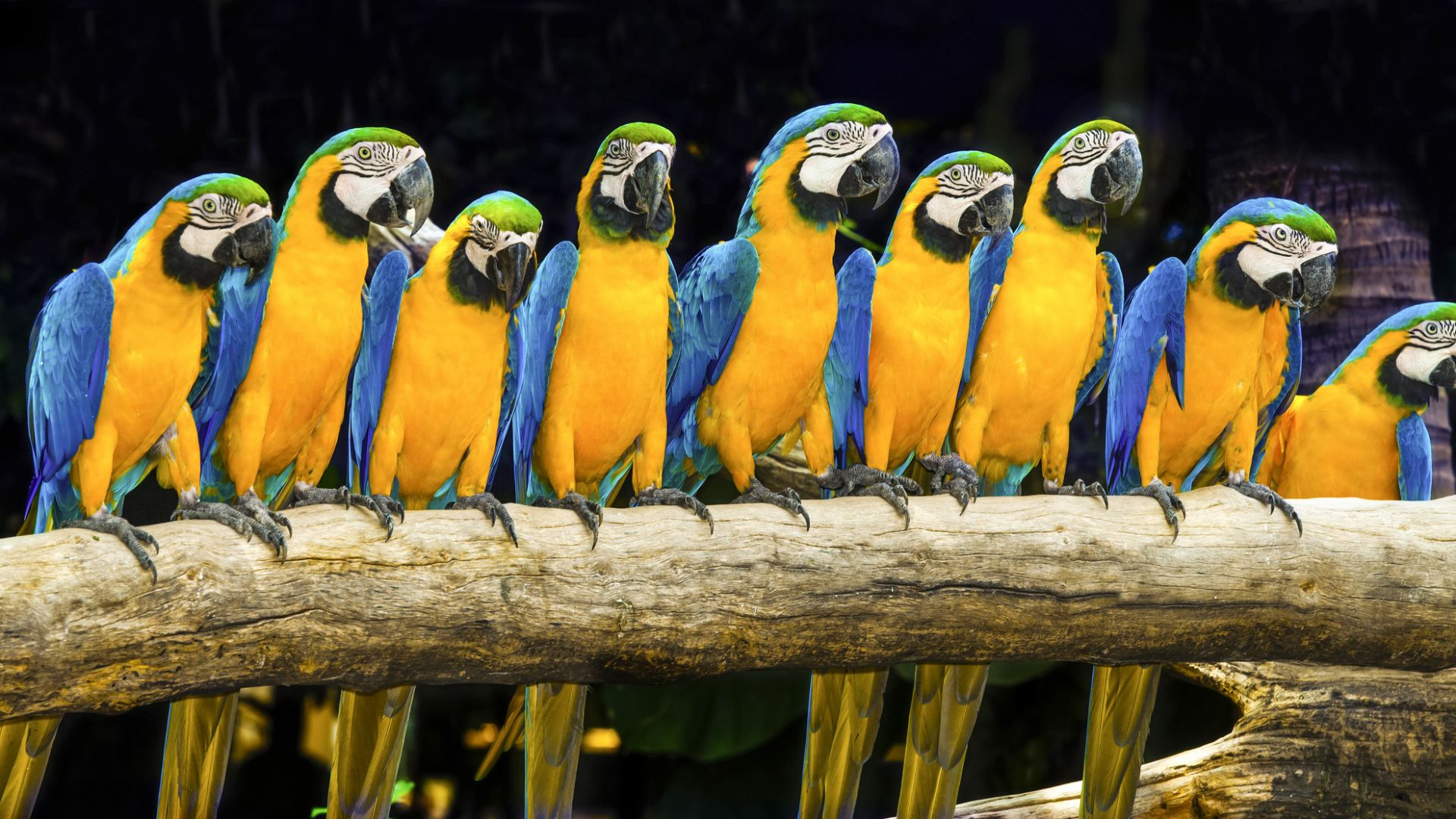 Macaw Parrot Photo