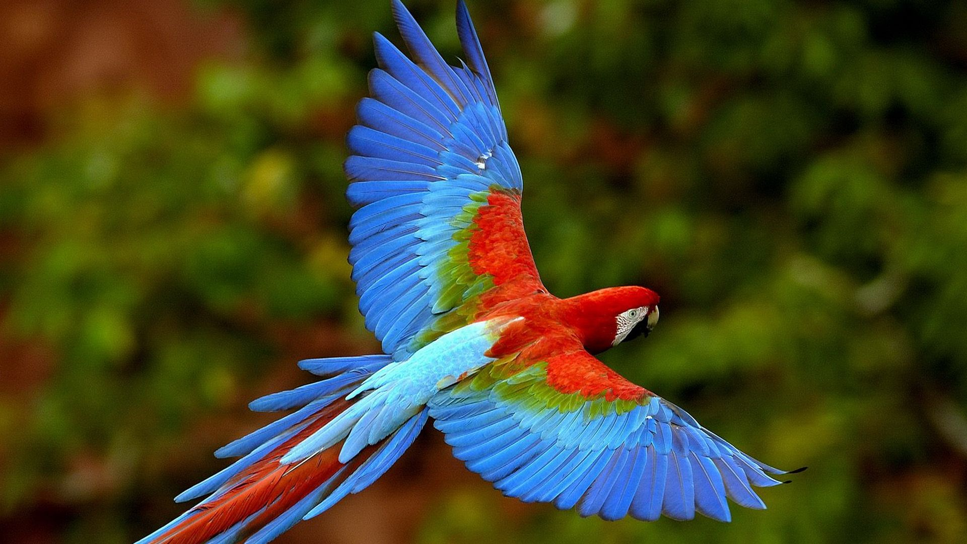 Macaw Parrot Pictures