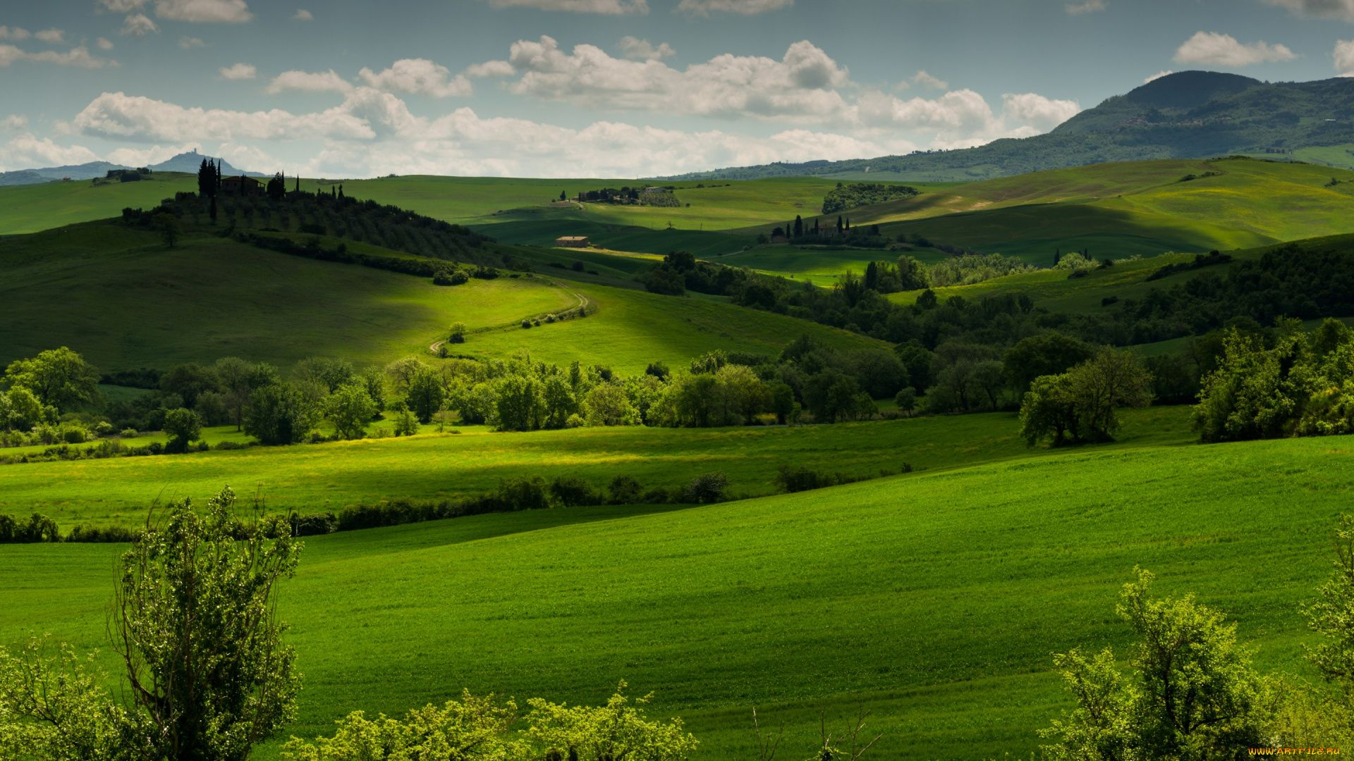 Meadows Of Tuscany Pictures
