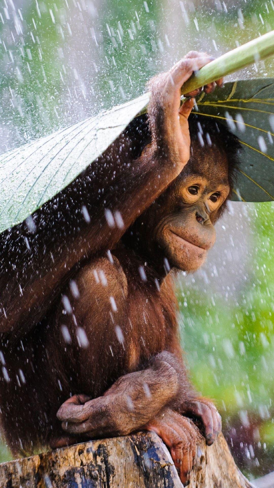 Monkey In The Rain Photo