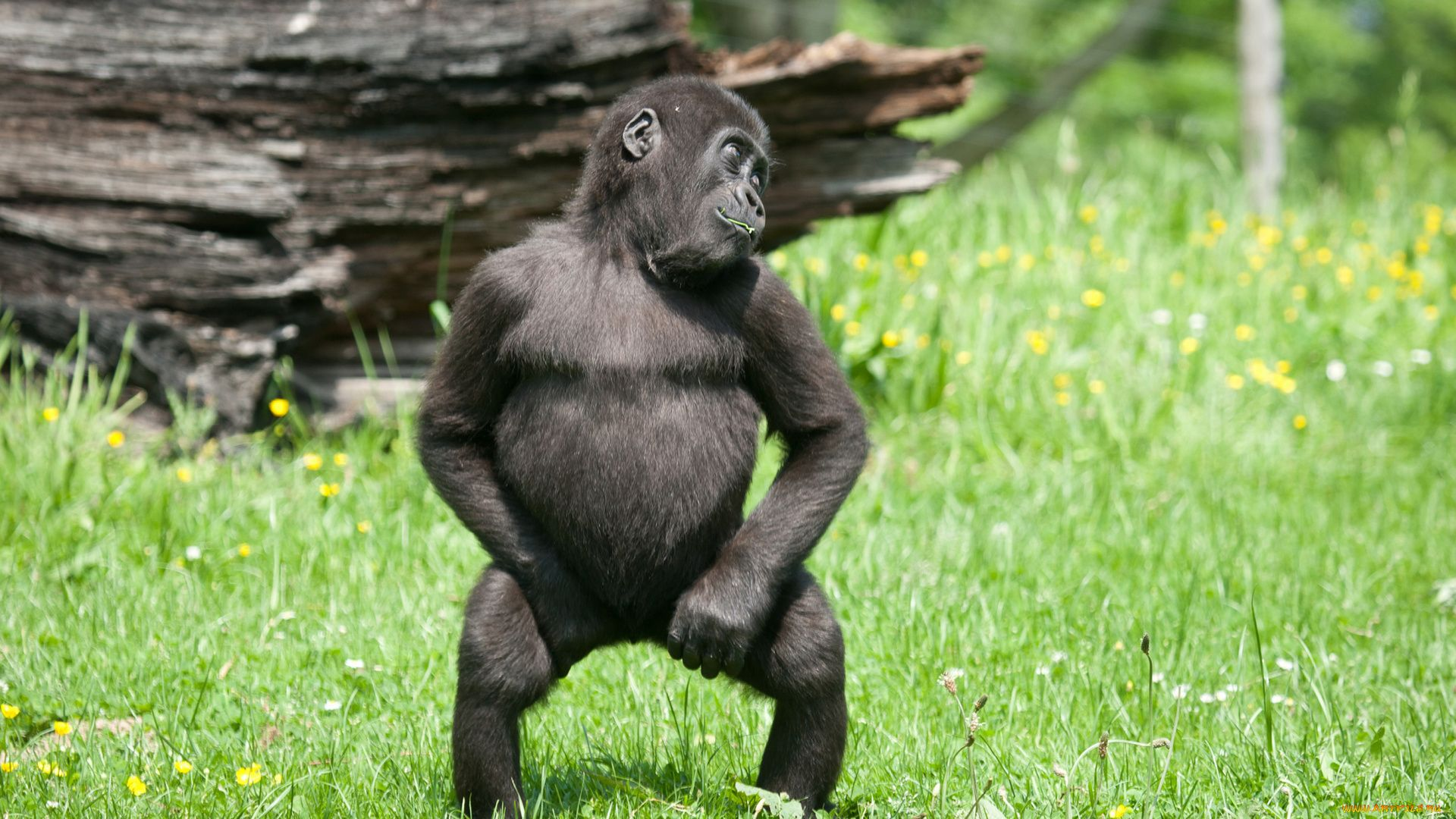 Monkey Is