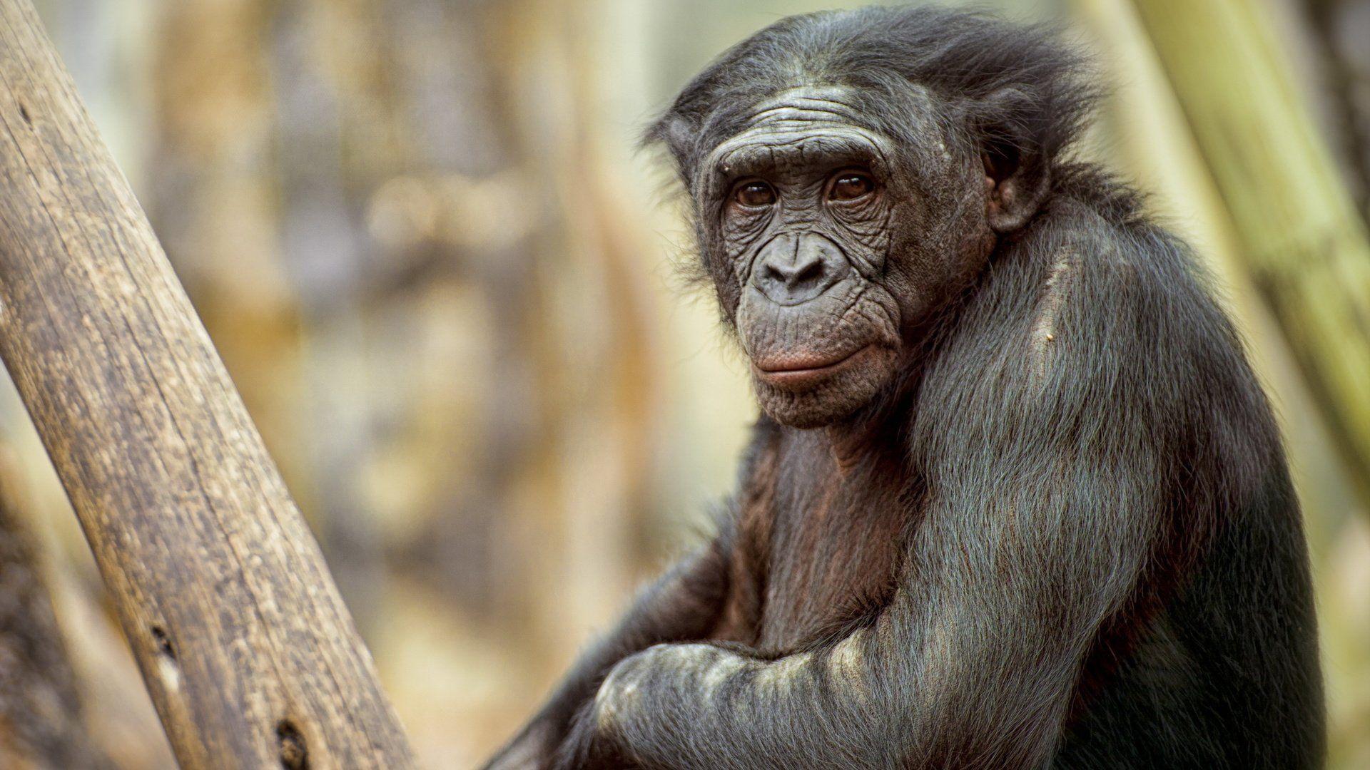 Monkeys Primates