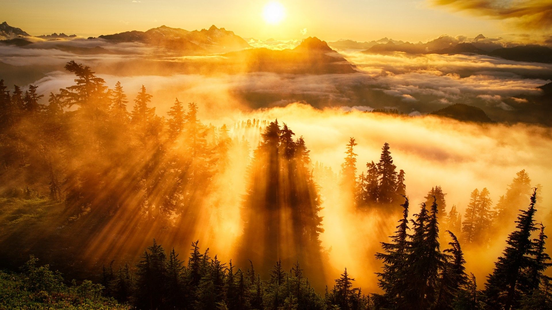 Mountain Forest Sunset