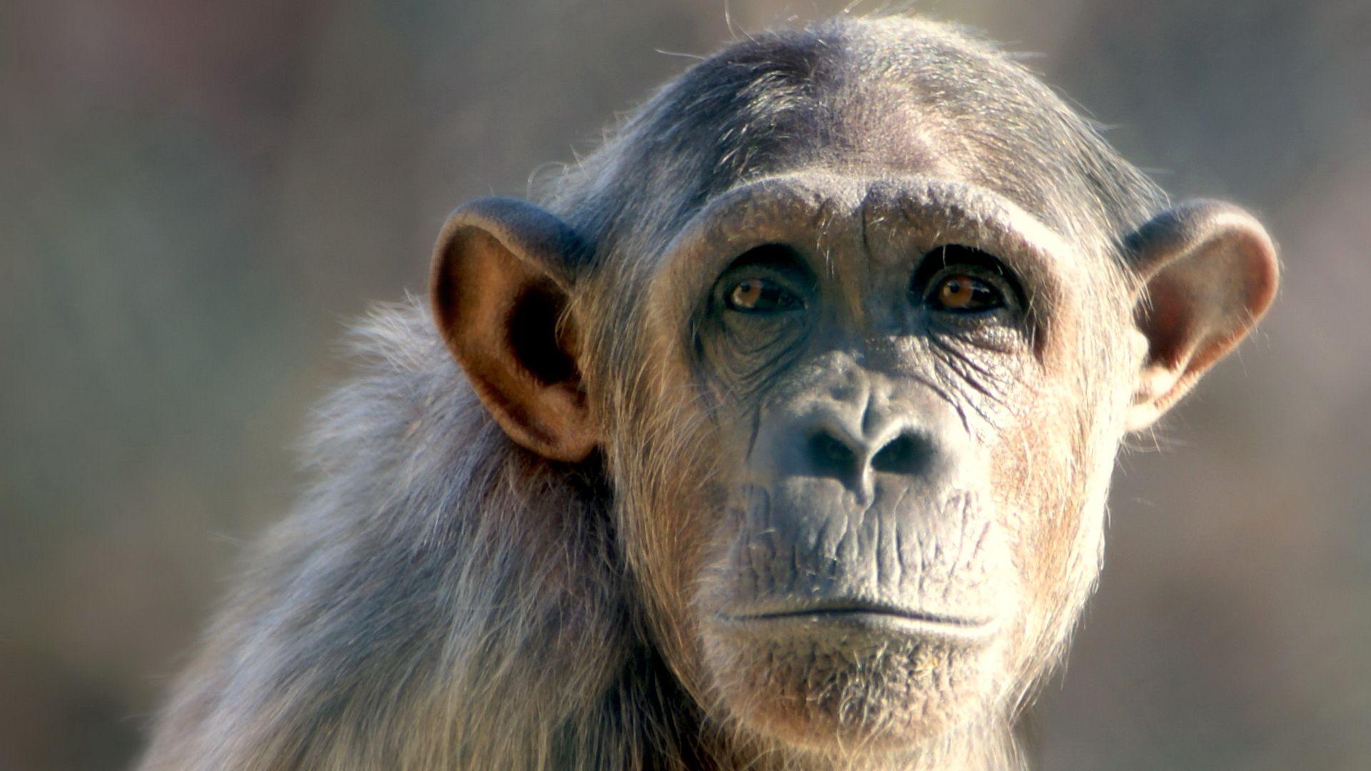 Muzzle Monkeys