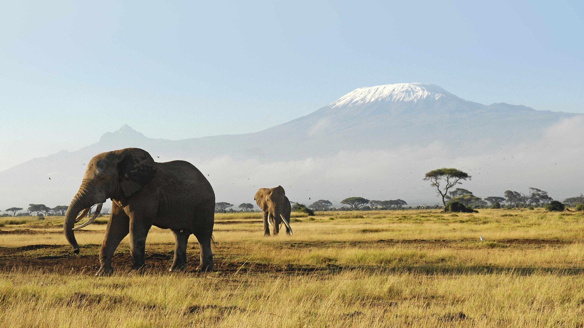 National Park, Africa, Amboseli Photo