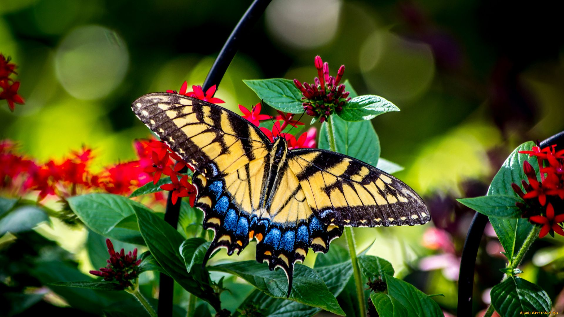 Nature Flowers Butterfly