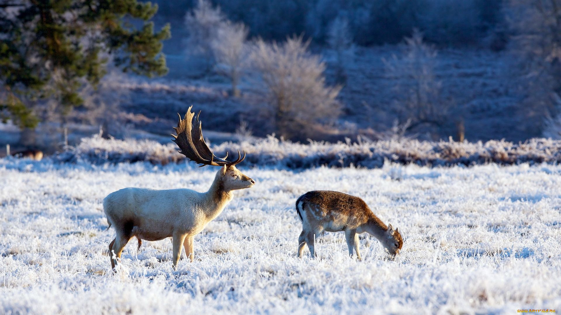 Nature Forest Animals Winter